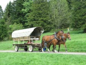 Promenade ou balade en char attelé avec deux chevaux de la race Franches-Montagnes