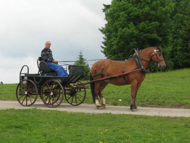 Char de Marathon pour promenade en char de 2 à 3 personnes, dans les Franches-Montagnes