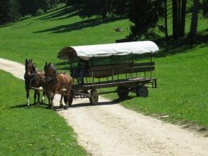 Char 12 places attelé de 2 chevaux pour promenade dans le jura