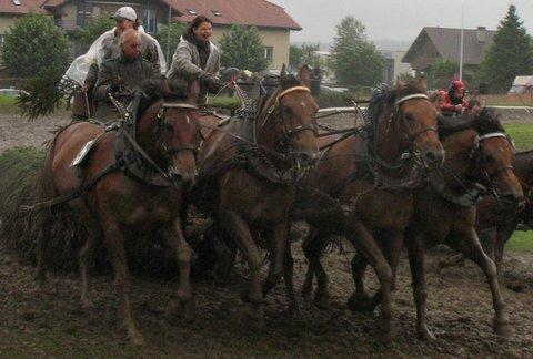 Marché-Concours Saignelégier, courses à 4 chevaux