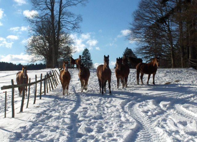 Le Cerneux-Belin en hiver